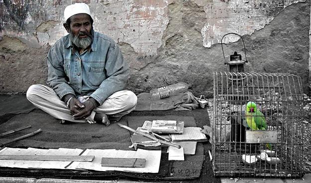 parrotfortuneteller