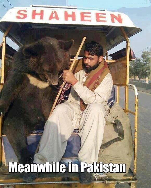 Pakistanbear