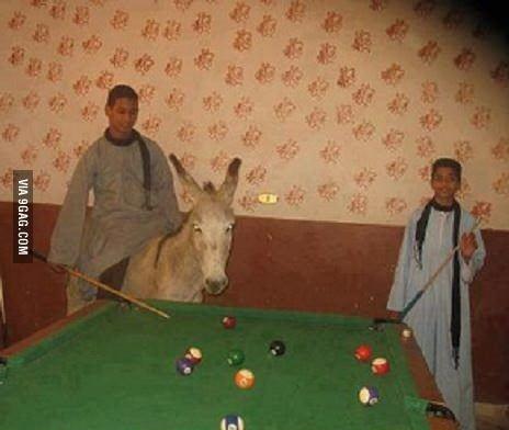 donkeysnooker