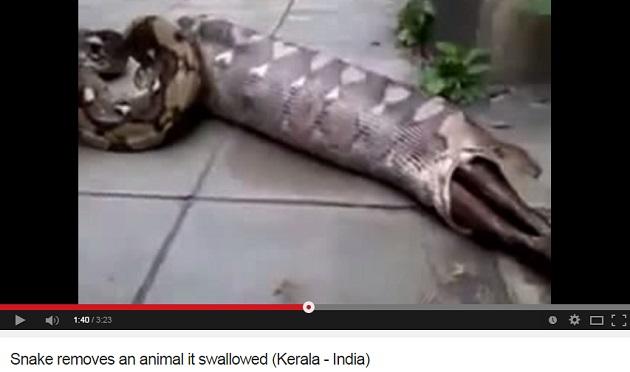 snakekeralavideo