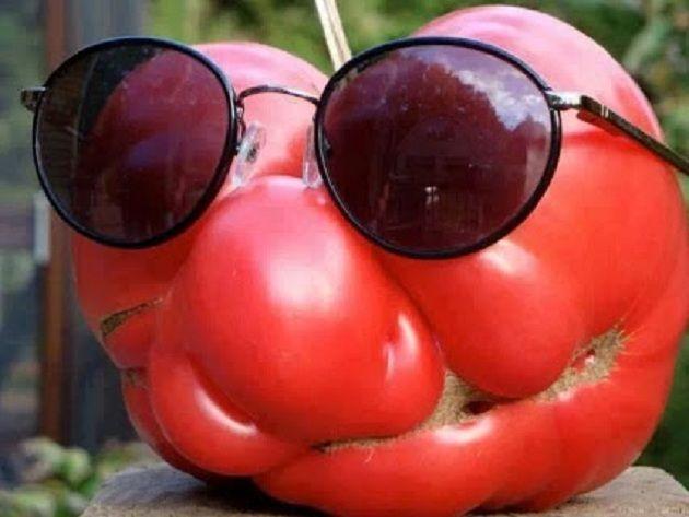granny tomato jokes