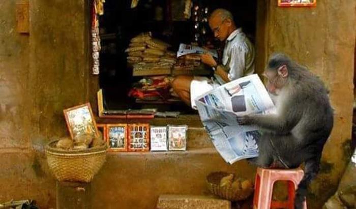 monkey-reading-newspaper-india