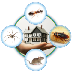 get-rid-of-mosquitos-rats-bugs-ultrasonic-pest-control-revolutionary-new-service-1474470805