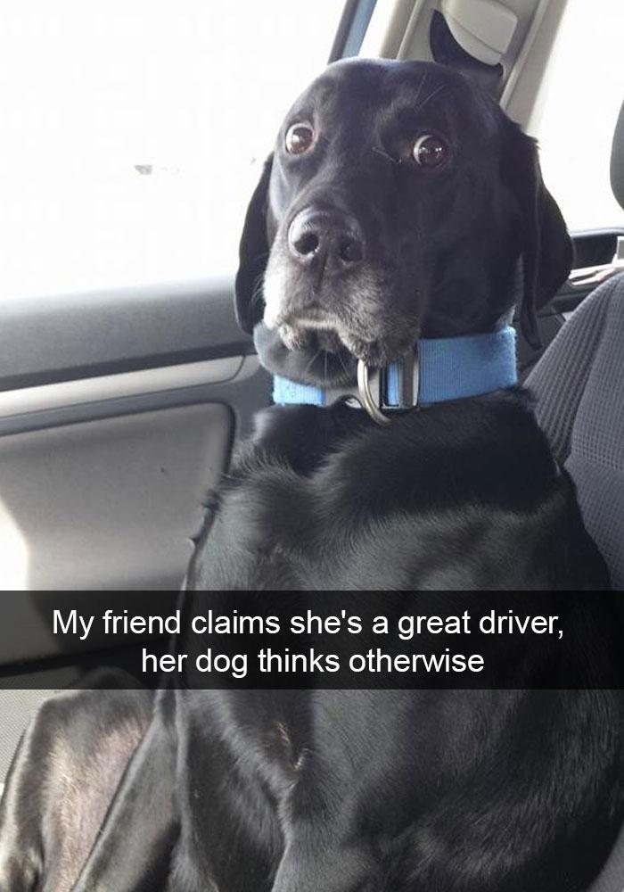 dog-snapchat-11
