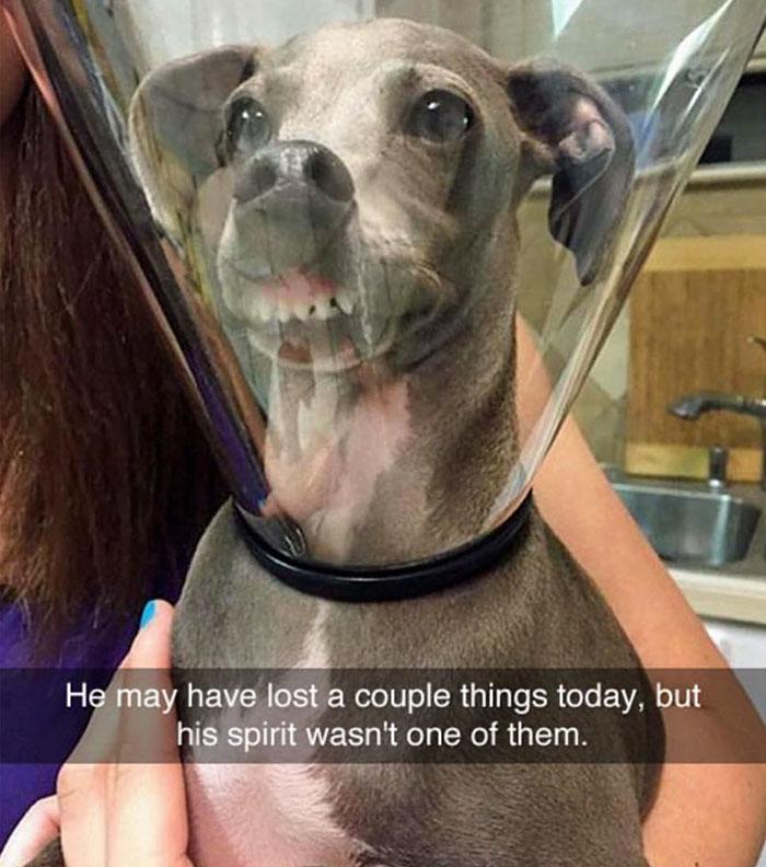 dog-snapchat-17