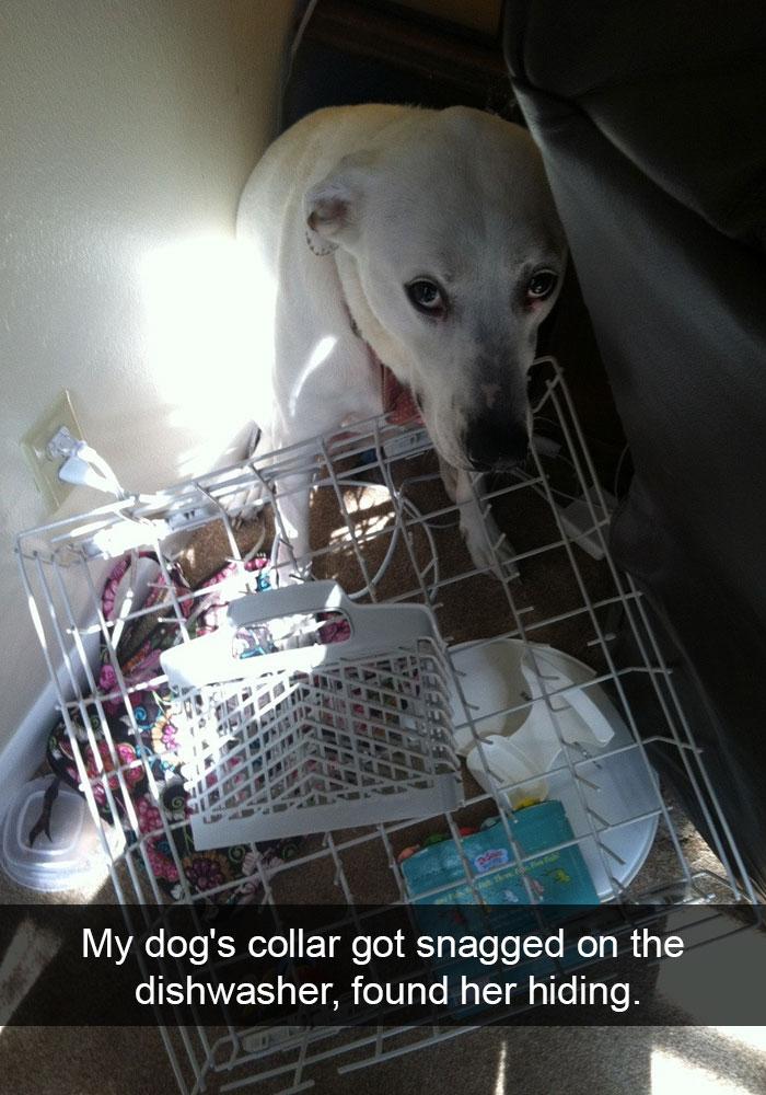 dog-snapchat-18