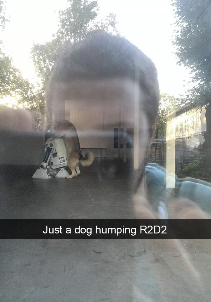 dog-snapchat-5