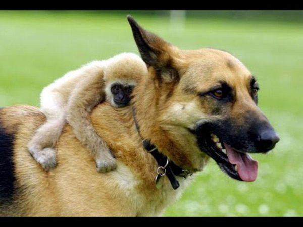 animals-riding-animals-1