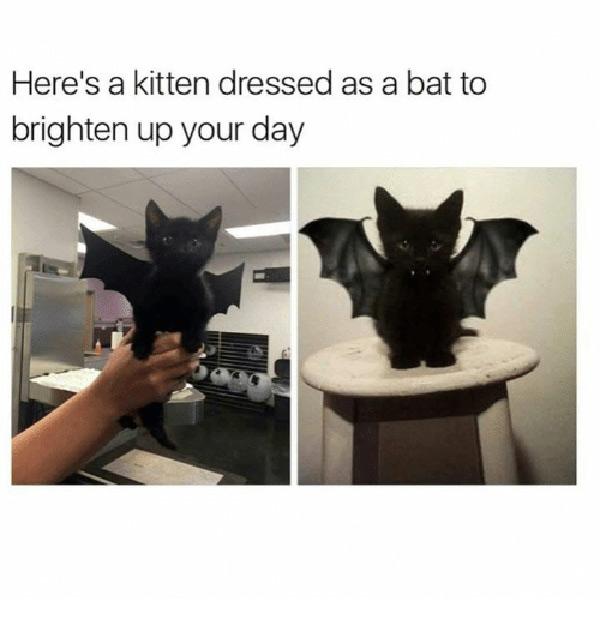 crazy cat women