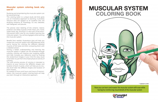 Easy Human Anatomy Physiology Of The Body Learn Through Coloring