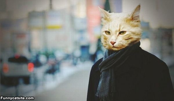 www.funnycatsite.com