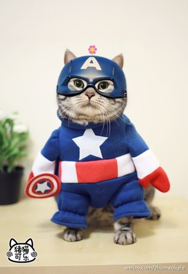 https://www.pinterest.com/explore/cat-dressed-up/