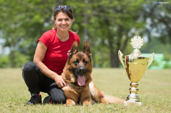 German Shepherd Breeders Show Dogs Green Bay