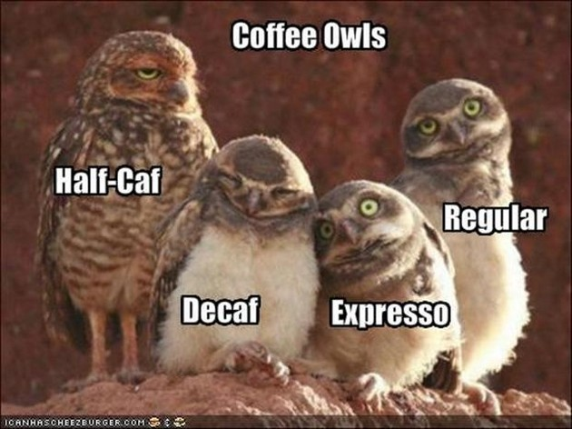 Image result for funny coffee