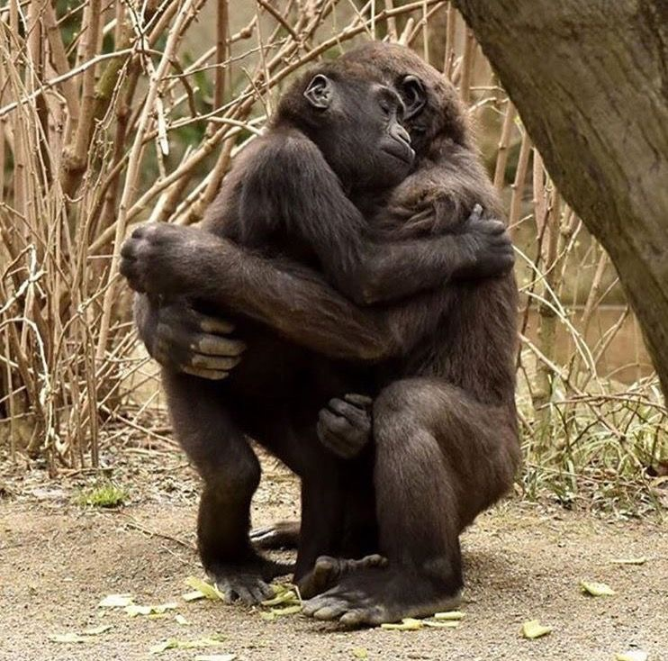animals hugging hug embrace