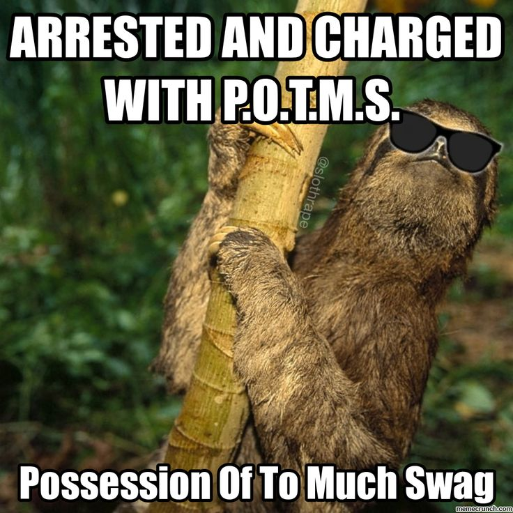 14 Sloth Memes That Will Quickly Make Your Day More Exciting