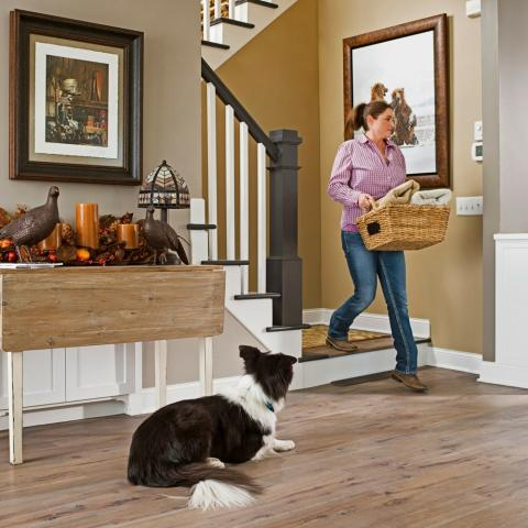 Revolutionary new Indoor Solution for Pet Safety offered by ...