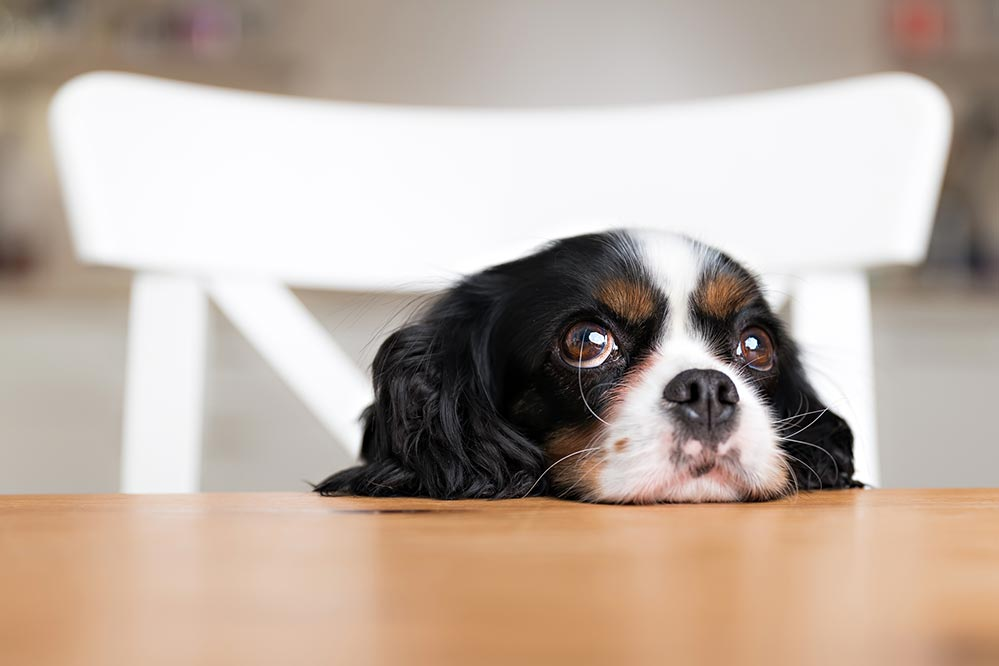 dog table name