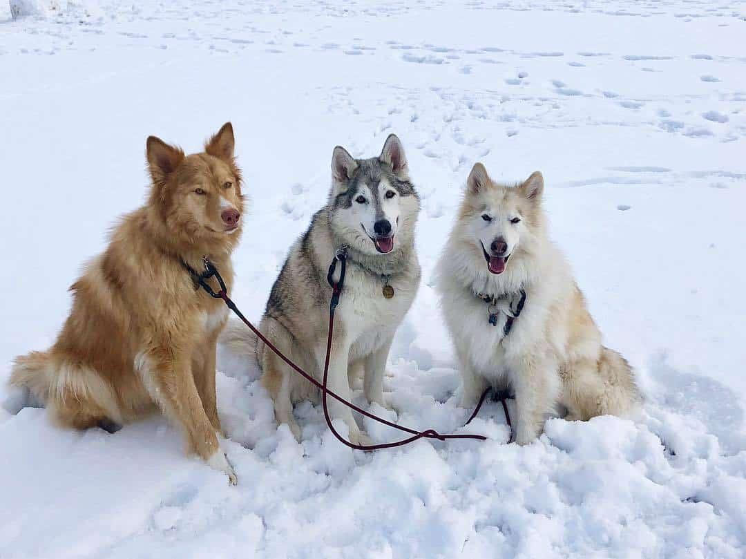 100+ Patriotic Dog Names – yasminroohi