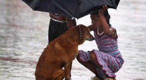 girl umbreall dog rain