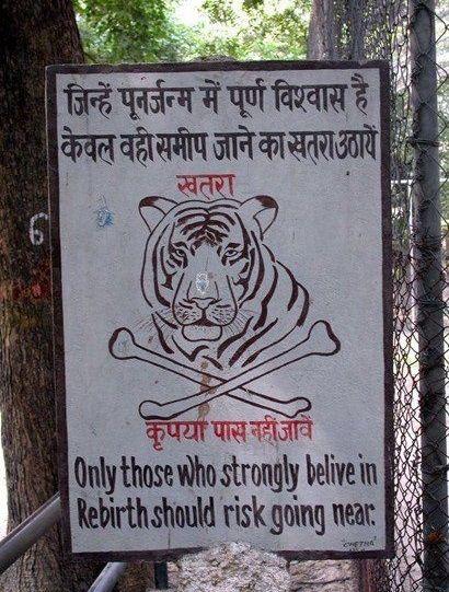 tigerrebirth