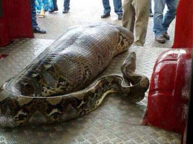 drunk python