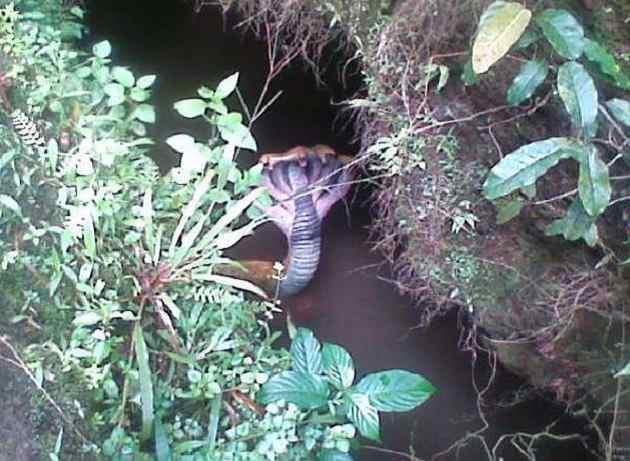 karnataka snake