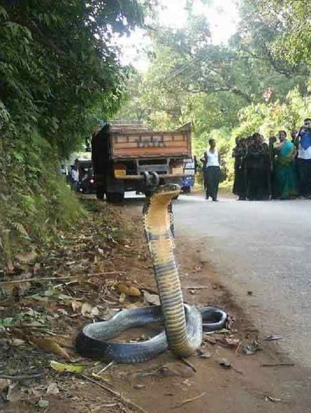 real snake