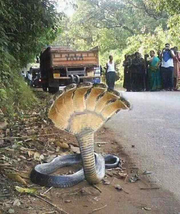seven headed snake