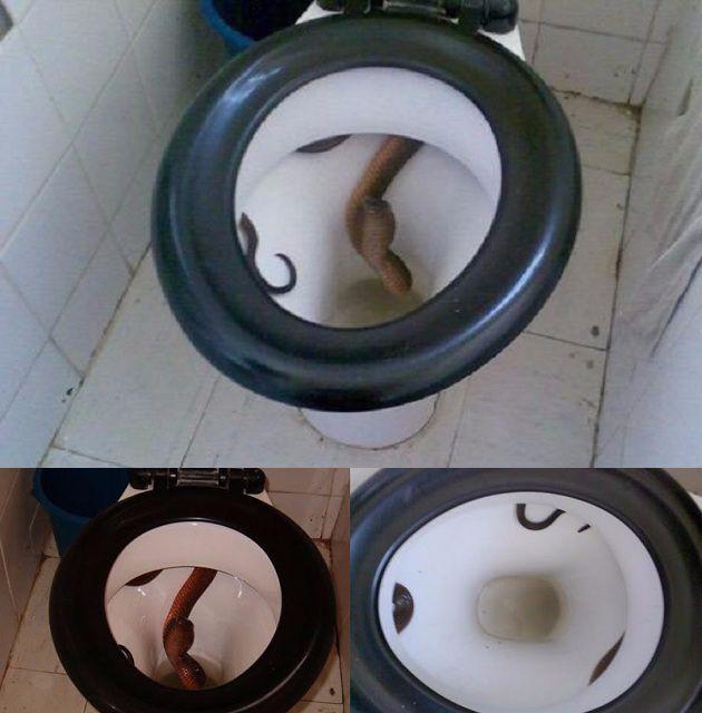 snakeintoilet