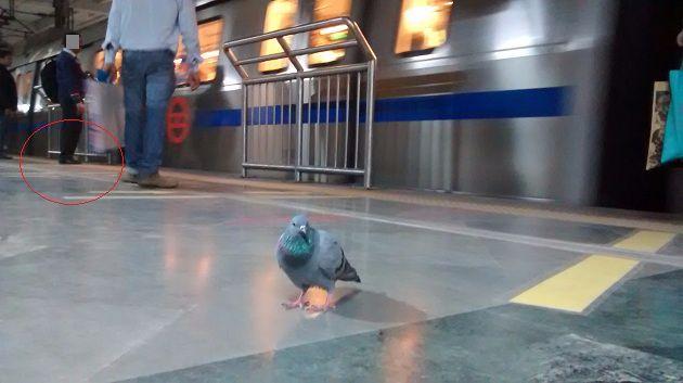 pigeonsubway