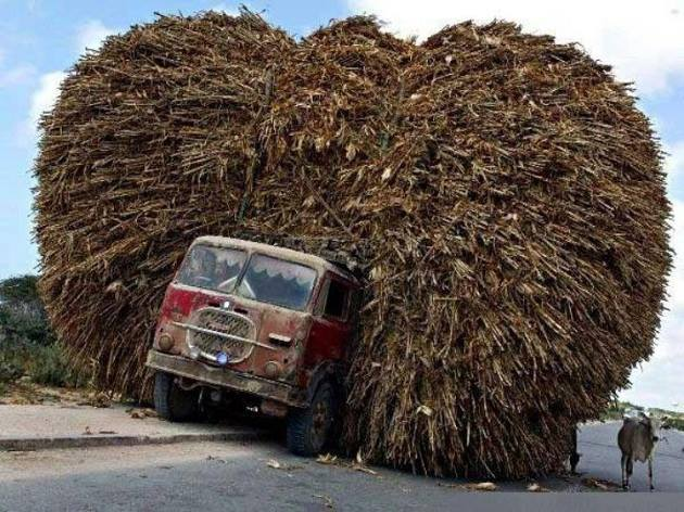 truckcane