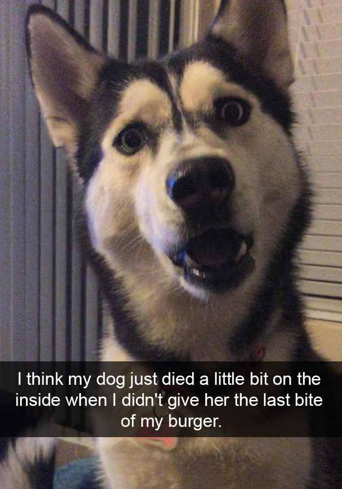 dog ruled snapchat