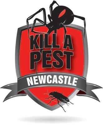 find out how to prevent costly damage with a termite inspection in newcastle new