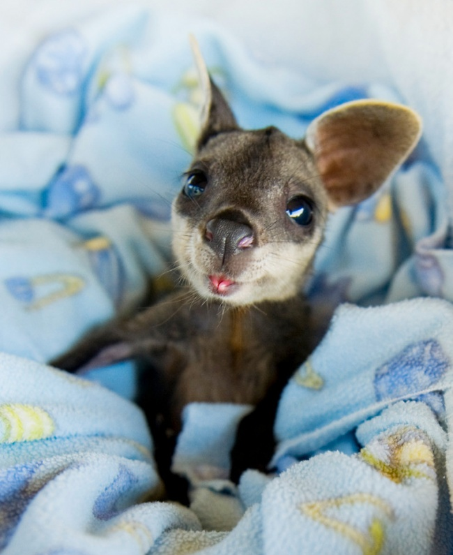 baby animal image