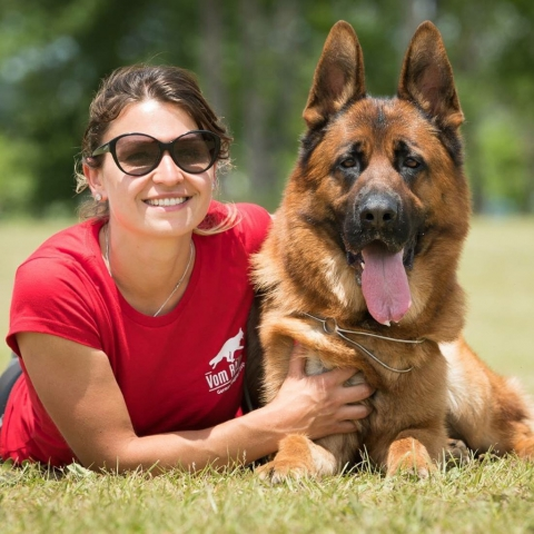find show winning german shepherds near chigago with this best in class dog bree