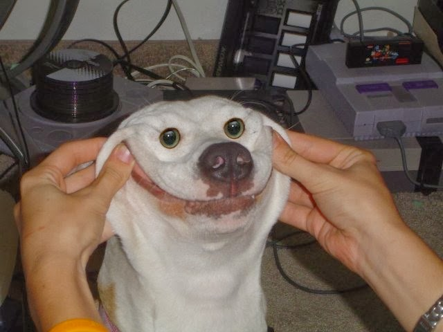 Funny Dog Face Images