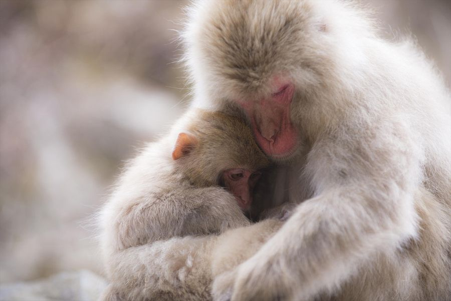 animals hugging hug embrace