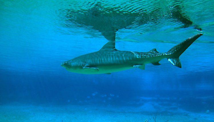 Deadly Sea Creatures