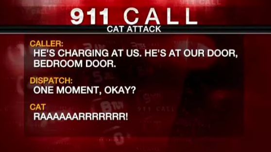 13 Funny 911 Calls That You Wouldn\'t Believe Really Happened