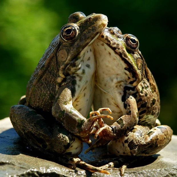 Cute Frog Pictures