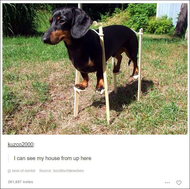 Hilarious Tumblr Messages
