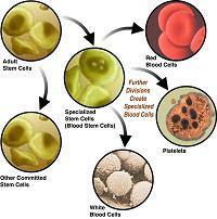 discover the benefits of cord blood banking amp stem cell research for combating