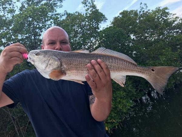 captain mike murphy of fish this inshore charters provides expert tampa fishing