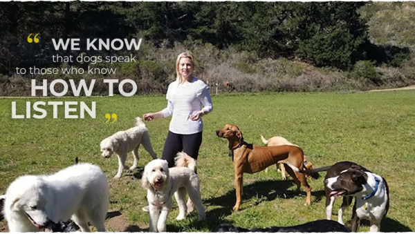 get the best belmont san bruno group dog walking sessions nature playtime amp ex