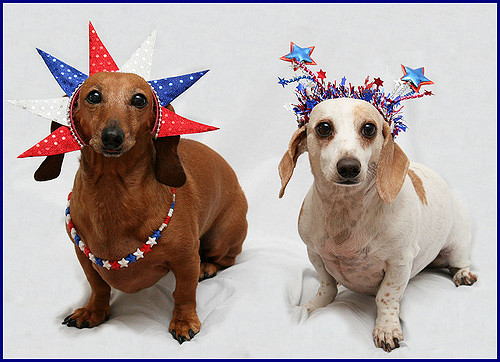american dog name