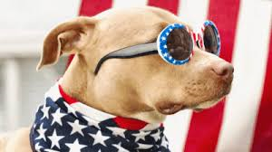 Patriotic Names For Dogs