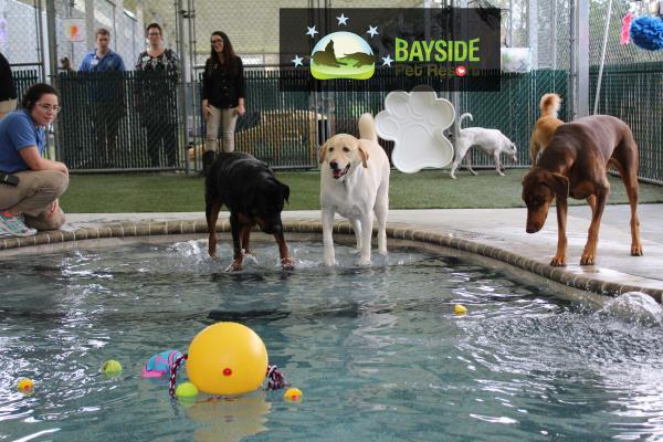 sarasota s bayside pet resort builds a doggie swimming and wading pool