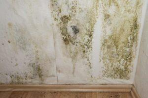 get the best boise id interior mold testing plus remediation crawlspace attic am