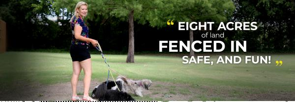 get the best san mateo belmont fenced in dog walking sessions amp exercise